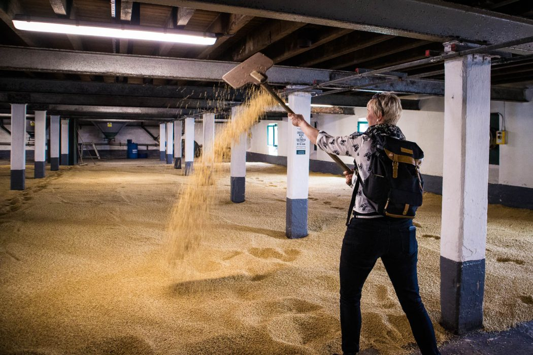A woman turning barley on a malting floor with a wooden shovel.