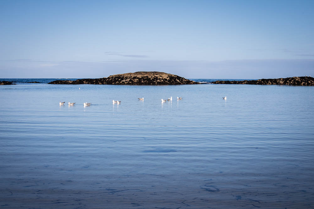 Seabirds on Coll