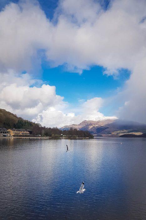 Seagulls flying over Loch Lomond