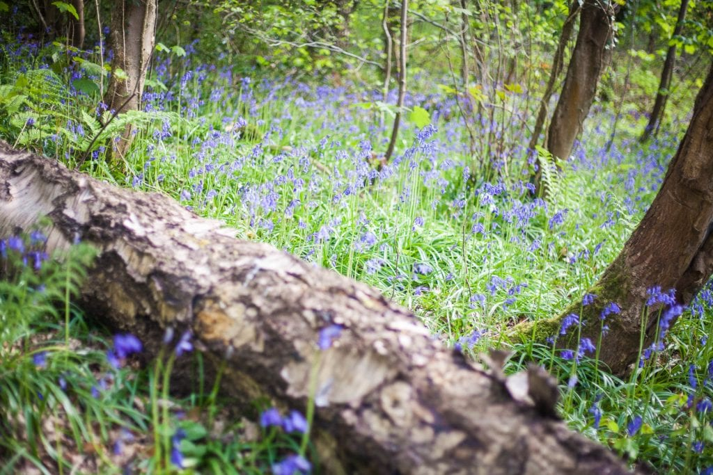 If you love to see the flowers of Spring surrounded by serene woodlands and a beautiful river, a day trip to Bothwell Castle is perfect for you!