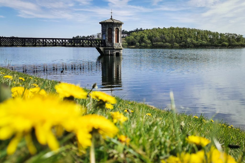 flowers and a pump tower at Dams to Darnley Country Park in Glasgow