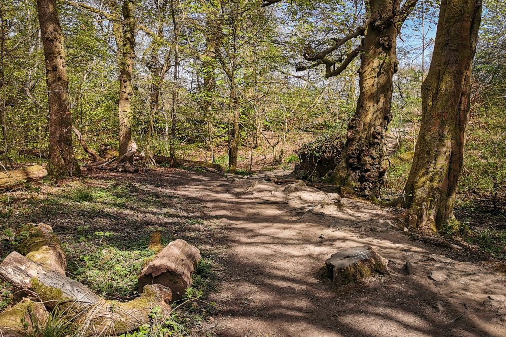 Woodlands at Dams to Darnley Country Park in Glasgow