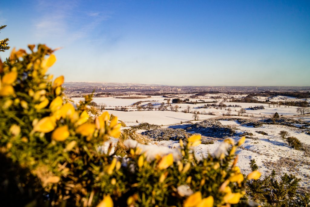 Yellow gorse flowers and Views from the top of Duncarnock Fort Hike in Glasgow