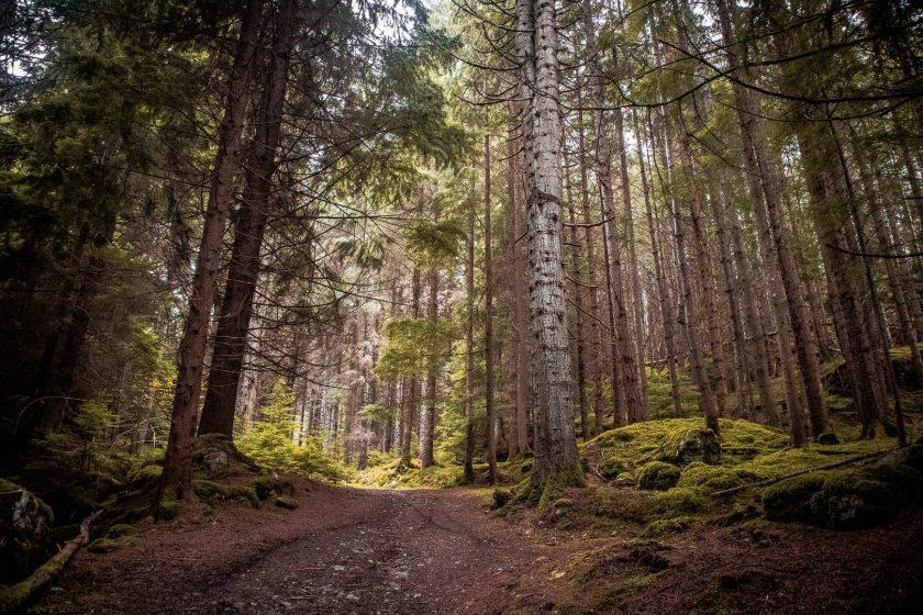 Woodland trail at Farigaig Forest near Loch Ness in Scotland.