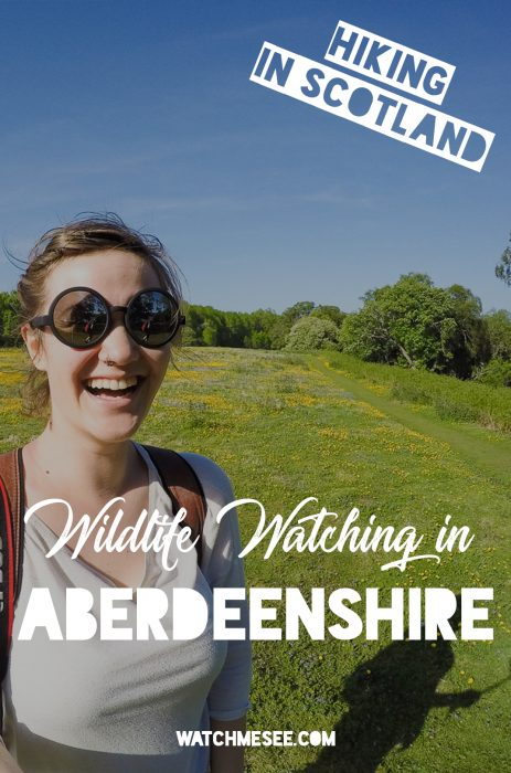 Castles are not the only attraction along the Castle Trail in Aberdeenshire. The Royal Deeside is a lush green paradise, and you will find several easy and family-friendly hikes around the Muir of Dinnet Nature Reserve. In this post you'll find out how to hike the Loch Kinord loop trail!