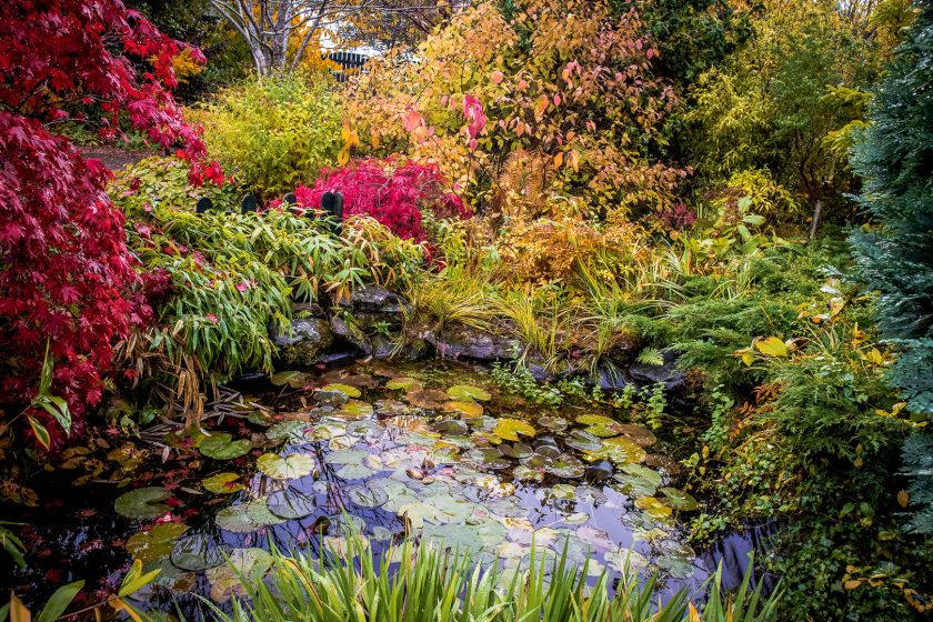 A pond at the Inverness Botanic Gardens in Scotland.