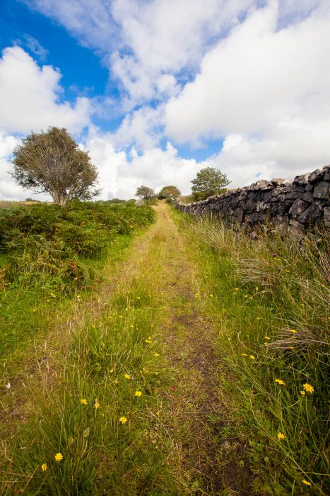 A grassy path on the Isle of Ulva.