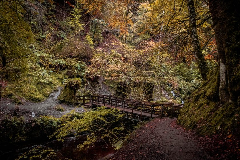 A wooden bridge at Reelig Glen near Loch Ness in Scotland