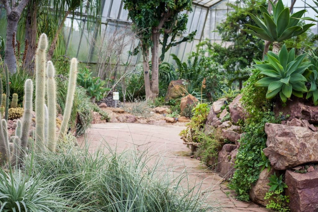 Cacti at the Royal Botanic Garden in Edinburgh.