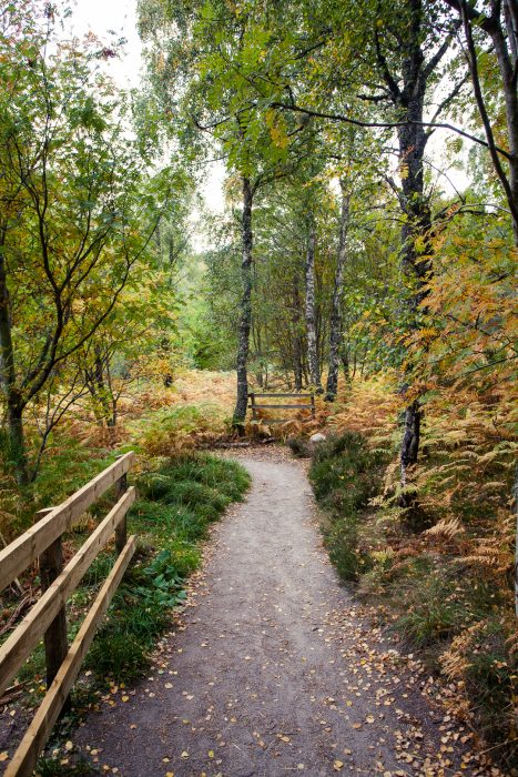 Autumnal woodlands at the Burn o' Vat trail in The Royal Deeside.