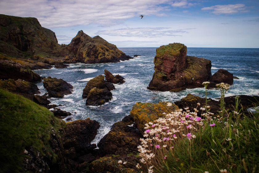 The cliffs of St Abbs Head nature reserve in the Scottish Borders