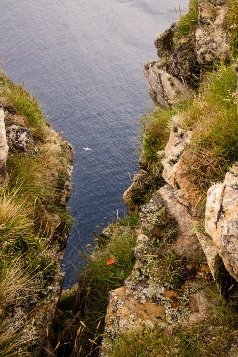 A bird flying between the sea cliffs of St Kilda.