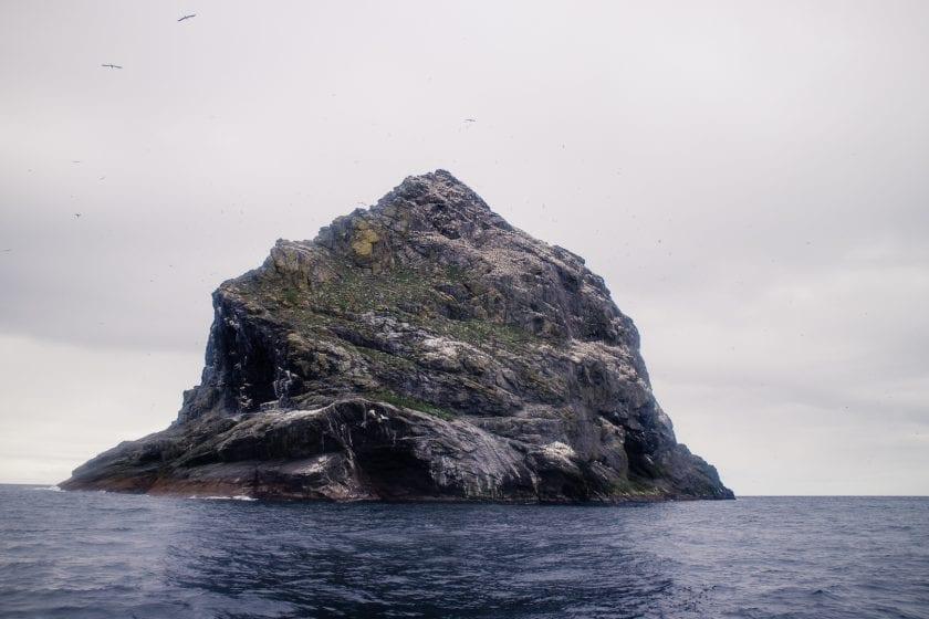 Sea bird colony at St Kilda.