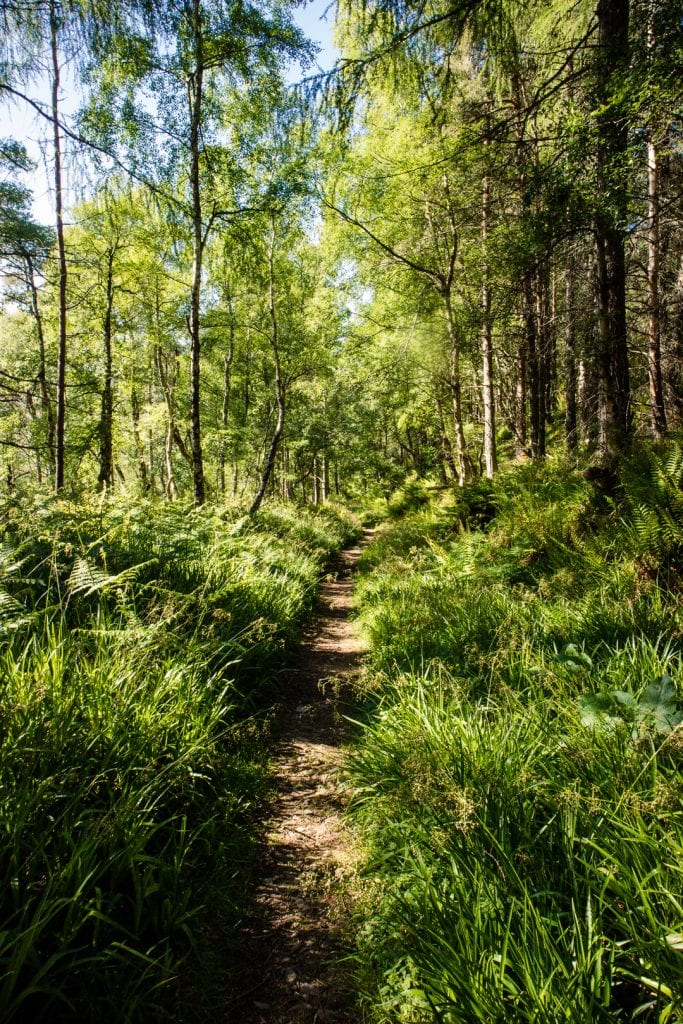 A lovely narrow trail on the Speyside Way.