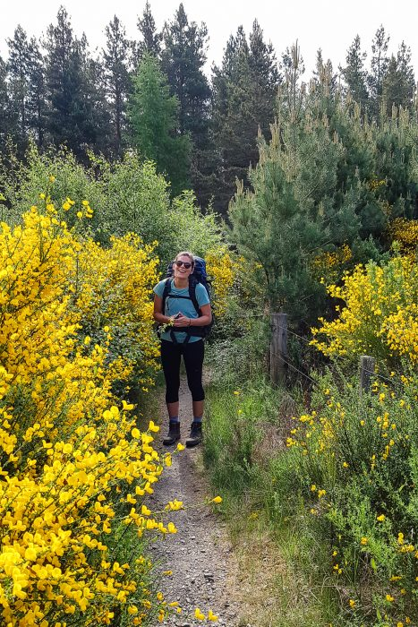 Walking through the forest by Nethy Bridge and through giant gorse bushes.