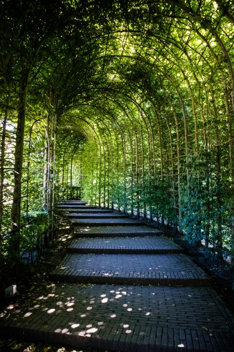 A green tunnel at Alnwick Garden in Northumberland.